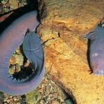 peixes-abissais 08