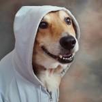 cachorrolegal
